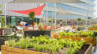 Mahou San Miguel instala un huerto ecológico en su sede