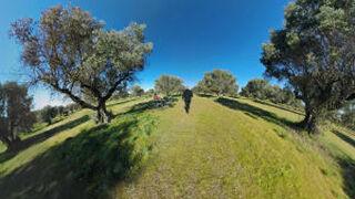 Deoleo acude a la realidad virtual para ensalzar su aceite de oliva