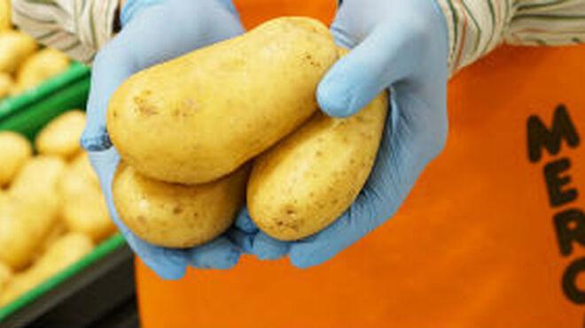 Mercadona inicia la campaña de patata española