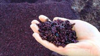 Matarromera analiza las aplicaciones de nuevos compuestos del vino