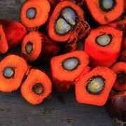 Sobre el aceite de palma, las fake news y los intereses