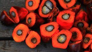 Adiós al aceite de palma también en Planeta Huerto