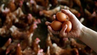 España, libre de huevos contaminados, según Sanidad
