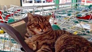 Brutus: pocos supermercados han tenido una mascota igual