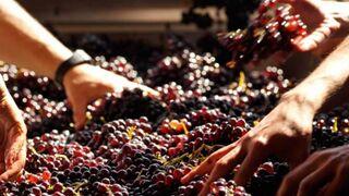 La producción de vino y mosto se dispara en la campaña 18-19