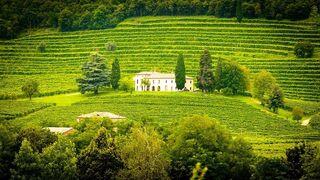 El turismo ligado al vino cala entre los españoles