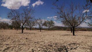 La sequía arroja pérdidas de 3.600 millones este año