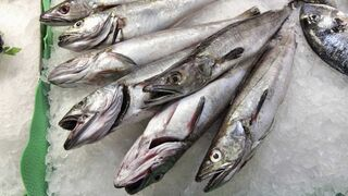 España logra paliar el recorte de merluza sur para 2018