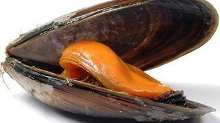 Los mejillones pueden salvarse de las mareas rojas
