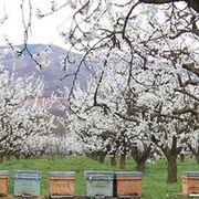 ¿Puede seguir España produciendo fruta como hasta ahora?