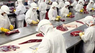 CC OO denuncia precariedad laboral en la industria cárnica