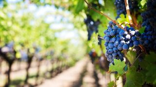 2017: año de logros para el sector agroalimentario