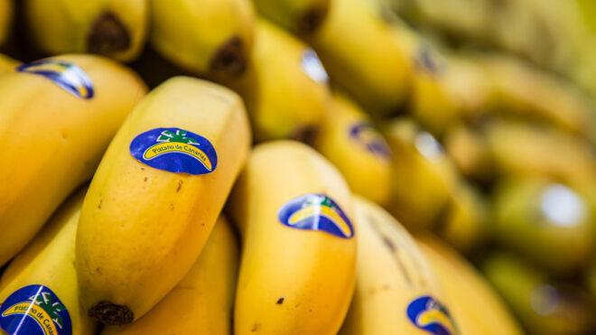 El sector del plátano acusa al Gobierno de abandono en plena crisis del volcán de La Palma