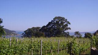 Luz verde a la IGP gallega vinos Ribeira do Morrazo
