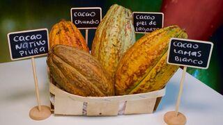 El cacao peruano y el pisco brillan en Madrid Fusión