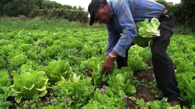 Baja el IRPF de los agricultores afectados por la sequía