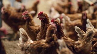 Mercadona ya vende huevos 'no malditos', pero no gana a Lidl