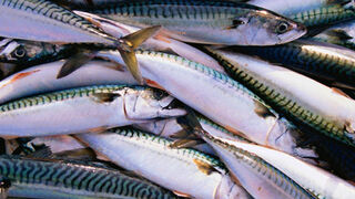 España logra una cuota adicional de pesca de caballa