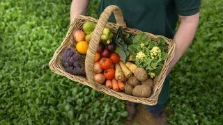 Publicado el nuevo reglamento de la producción ecológica
