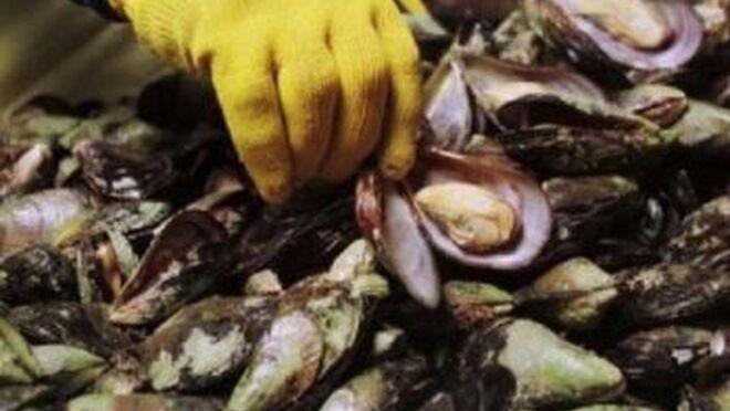 La OCU halla microplásticos en 69 de 102 alimentos marinos