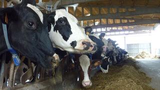 Los ganaderos cobran la leche el 14% menos que hace 4 años