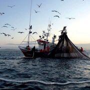 España y Portugal limitan las descargas de pescado