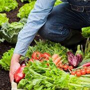"""Producción ecológica: en """"crecimiento sostenido"""""""