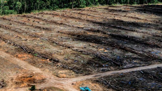 Greenpeace denuncia al mayor comerciante de aceite de palma