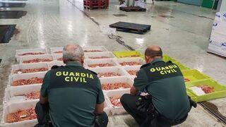 Operación Pinza Roja: 45 toneladas de cigalas