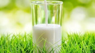 Norma histórica para el etiquetado español de la leche
