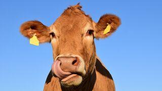 Lío en el campo por la leche
