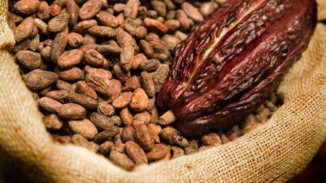 Mars: inversión millonaria por un cacao sostenible