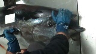 Caso Tarantelo: 79 detenidos por venta ilegal de atún rojo