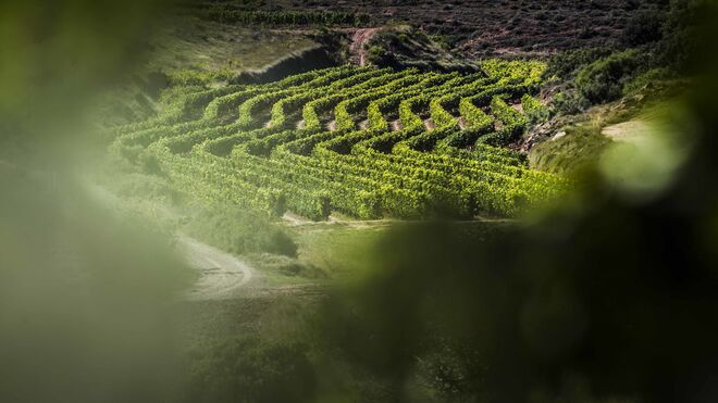 La DO Rioja blinda su producción hasta 2021