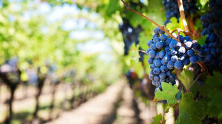 Cifras más que positivas para la producción vitivinícola