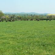 Ovino y vacuno inglés: hacia una ganadería sostenible