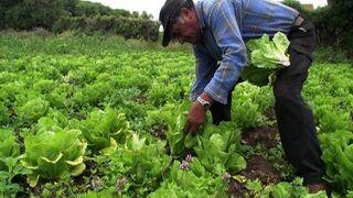 """Los agricultores hacen un balance """"negativo"""" del año"""