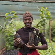 Nestlé refuerza su apuesta por el café de cultivo sostenible