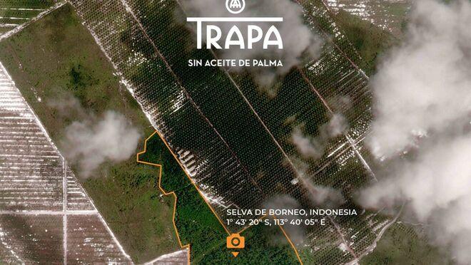 Trapa recrudece su guerra con el lobby del aceite de palma