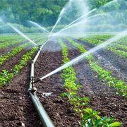 La producción de alimentos se lleva el 92% de la huella hídrica