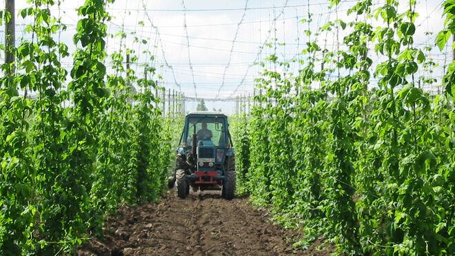 Luz verde a la norma que regula el sector del lúpulo