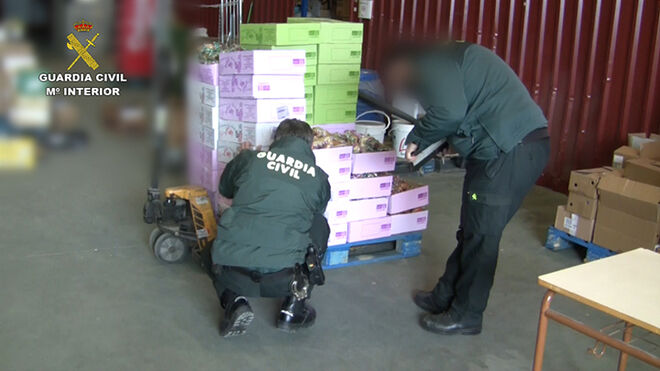 La Guardia Civil destapa un fraude de falsos alimentos 'bio'