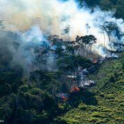 El incendio del Amazonas provoca una ola de reacciones contra el consumo de carne