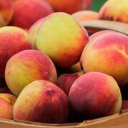 """""""Ruinosa"""" campaña de fruta de hueso para los agricultores"""
