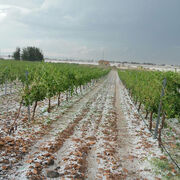 Uva y frutas de verano se llevan la peor parte de las tormentas