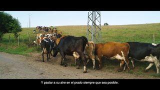 Lactalis celebra 20 años de leche ecológica en España