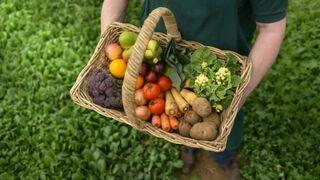 Nace EcoEspaña, un impulso para la agricultura ecológica