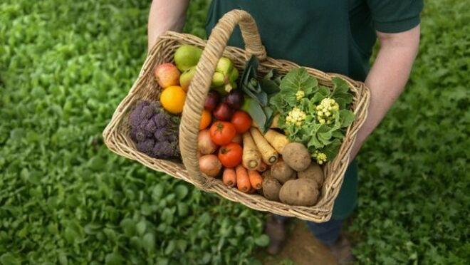 El Gobierno creará el Laboratorio Nacional de Sanidad Vegetal