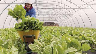 Vegalsa-Eroski incrementa las compras a proveedores locales