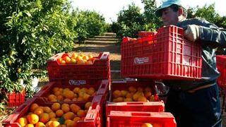 Nace Ribercamp, nueva cooperativa de frutas